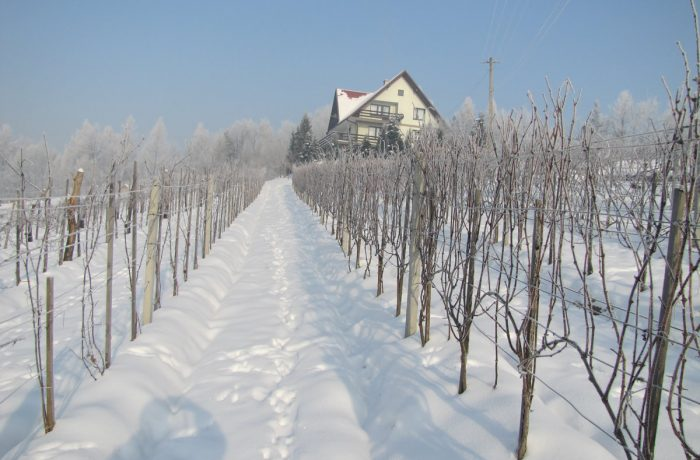 Winnica zimą